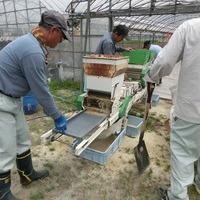 2015/05/23 大楠 種蒔きのサムネイル