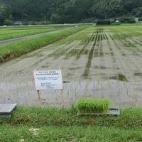 2015/06/27~28  農林水産省指定農場のサムネイル