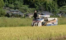 2016/10/10~11 大楠米稲刈り