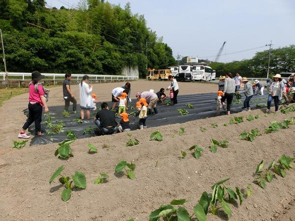 2017/06/10 未来児の芋植えのサムネイル