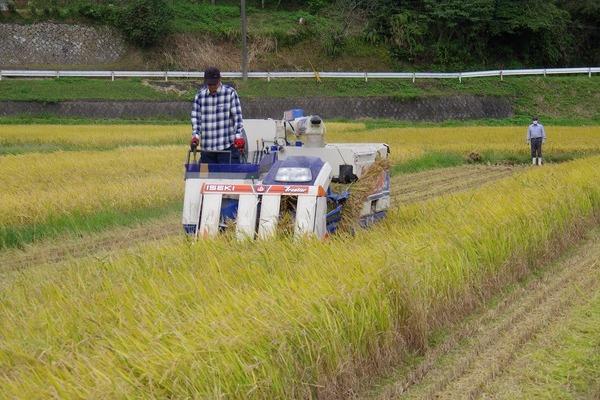 2013/10/19 大楠農産稲刈り