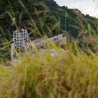 2013/10/19 大楠農産稲刈りのサムネイル