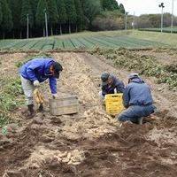 2011/11/28 芋ほり員in溝辺のサムネイル
