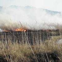 2007/02/11~03/18 こしき島耕作放棄地再生②のサムネイル