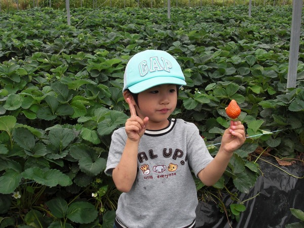 2012/05/26 大楠いちご狩りのサムネイル