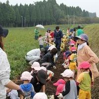2011/10/28 芋ほり保育園のサムネイル