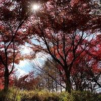 2019/11/29 光然京カルデラ訪問のサムネイル