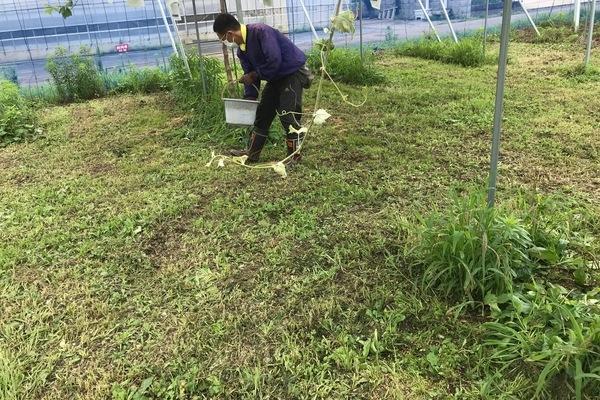 2019/07/12 川越市Kさんブドウ圃場に土壌改良