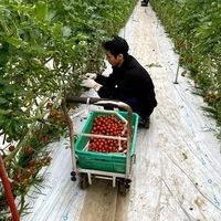 2020/02/17 深谷市Oさんの圃場で収穫体験のサムネイル