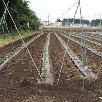2018/05/13~17 埼玉県農業支援のサムネイル