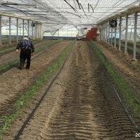 2019/08/06 深谷市Oさんトマト定植のサムネイル