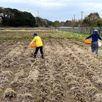2020/03/23 船橋市N企画社圃場で農作業のサムネイル