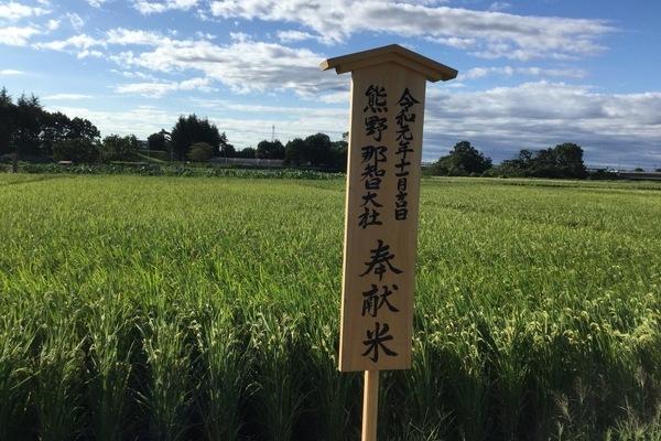 2019/09/12~14 川越V社のきぬむすめ