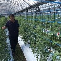 2018/10/18 八代Oさん農園のトマトのサムネイル