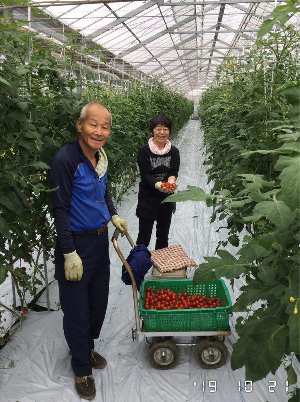 2019/10/21 深谷市Oさん農園にてトマト収穫体験のサムネイル
