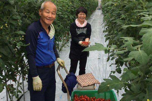 2019/10/21 深谷市Oさん農園にてトマト収穫体験