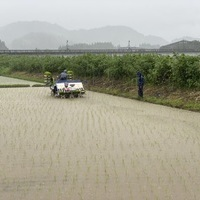 2020/06/27 大雨の中の田植えのサムネイル
