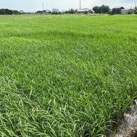 2020/07/17 農研機構新作品種の説明会のサムネイル