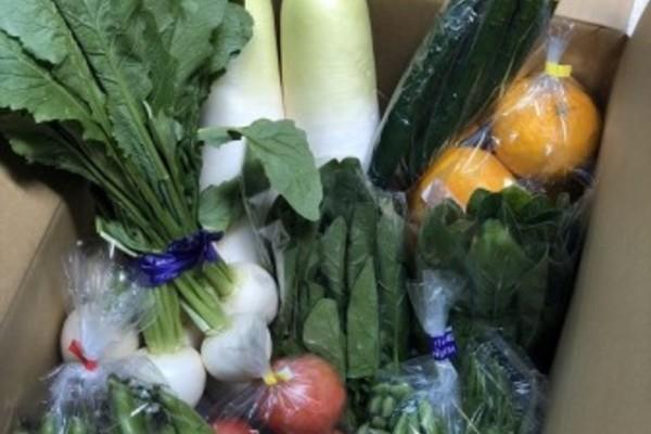 季節の野菜 5000円パック